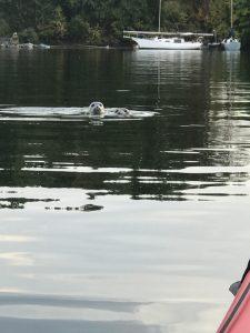 home-sea-otter
